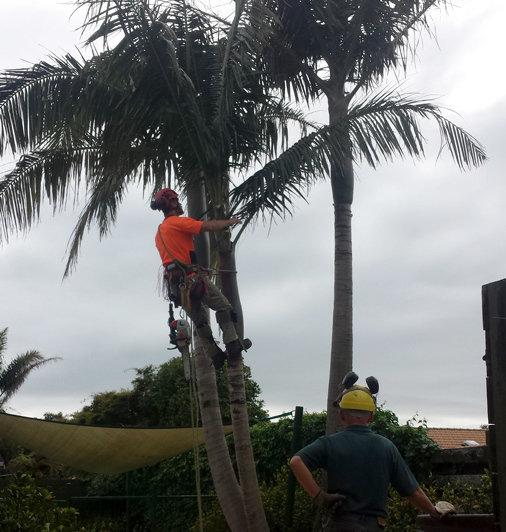 Tree Fellers services