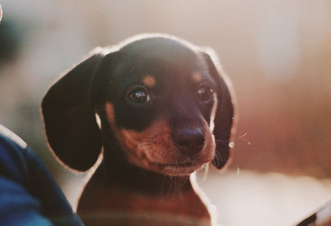 Does your Pet have Ear Mites or an Ear Infection?