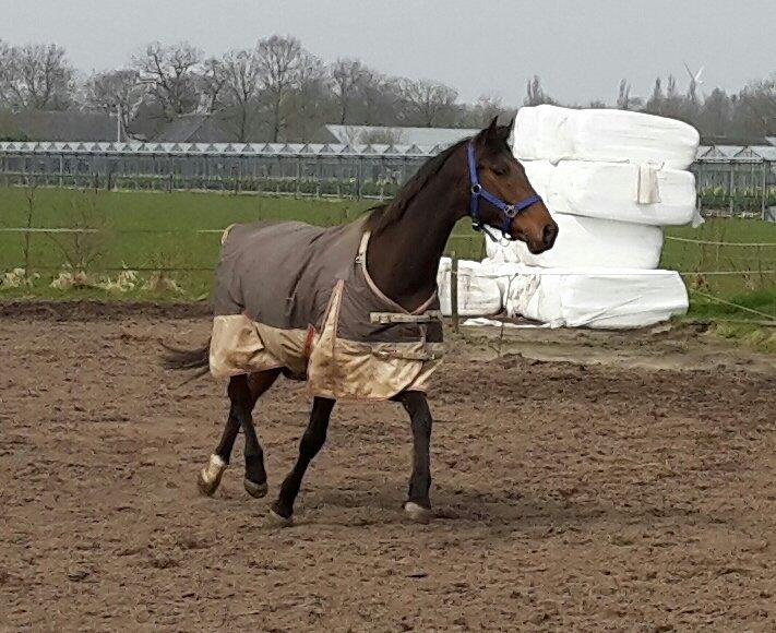 verzorg paard