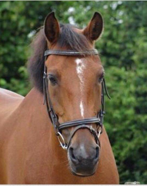 buitenrit paard