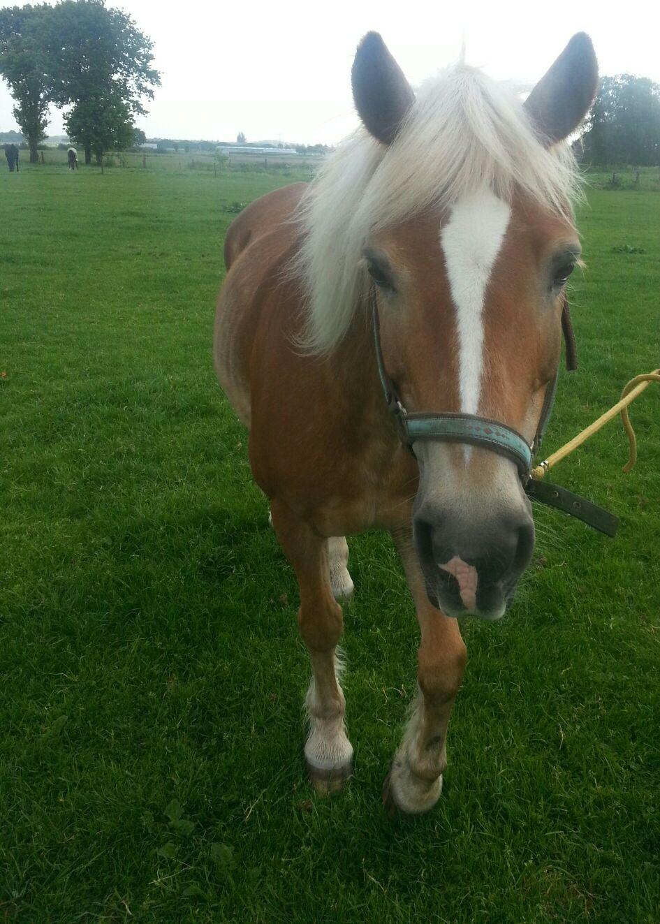 paardrijles beginners