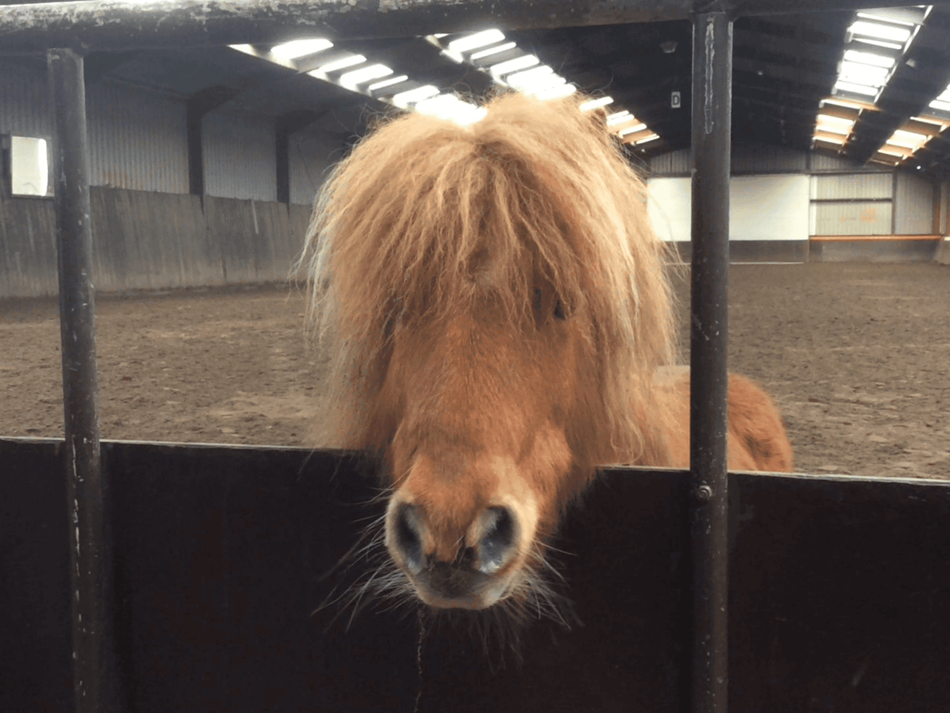 knuffel pony