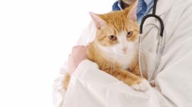 farmaci anestesiologici