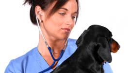 prodotti farmaceutici per uso veterinario