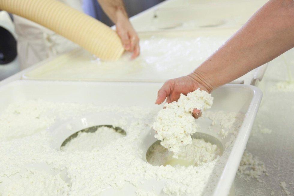 #cheesemaking