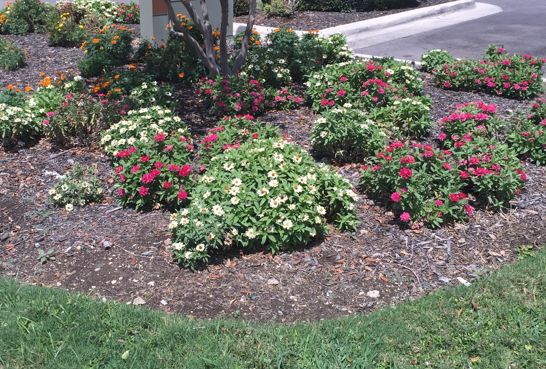 Irrigation systems and professional solutions in San Marcos, TX