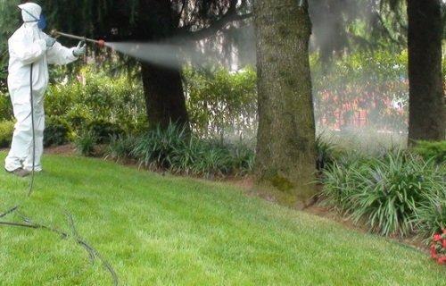 un albero ed un giardino