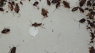 insetti morti