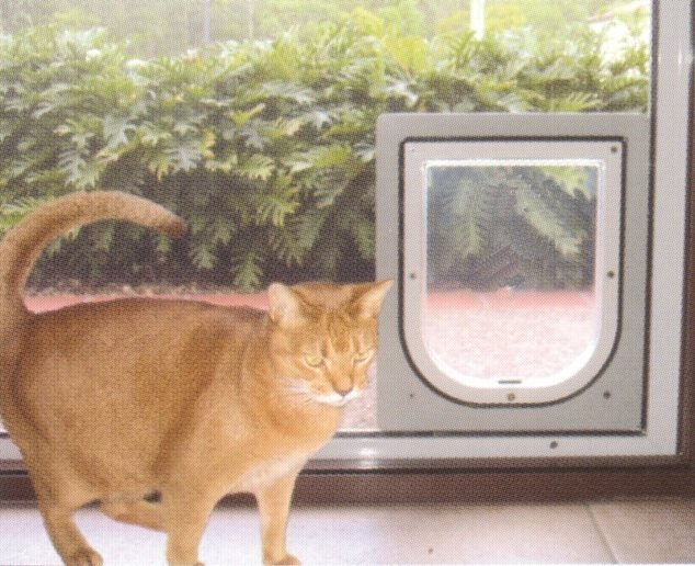 Security Pet Doors From Perth Just Glass