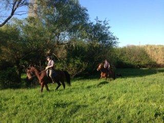 passeggiate a cavallo e turismo equestre