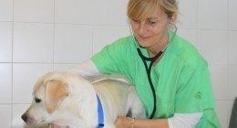 trasporto animali, servizio angrafe, visite veterinarie a domicilio