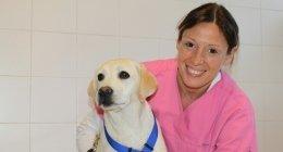 soccorso veterinario, interventi chirurgici animali, profilassi cani