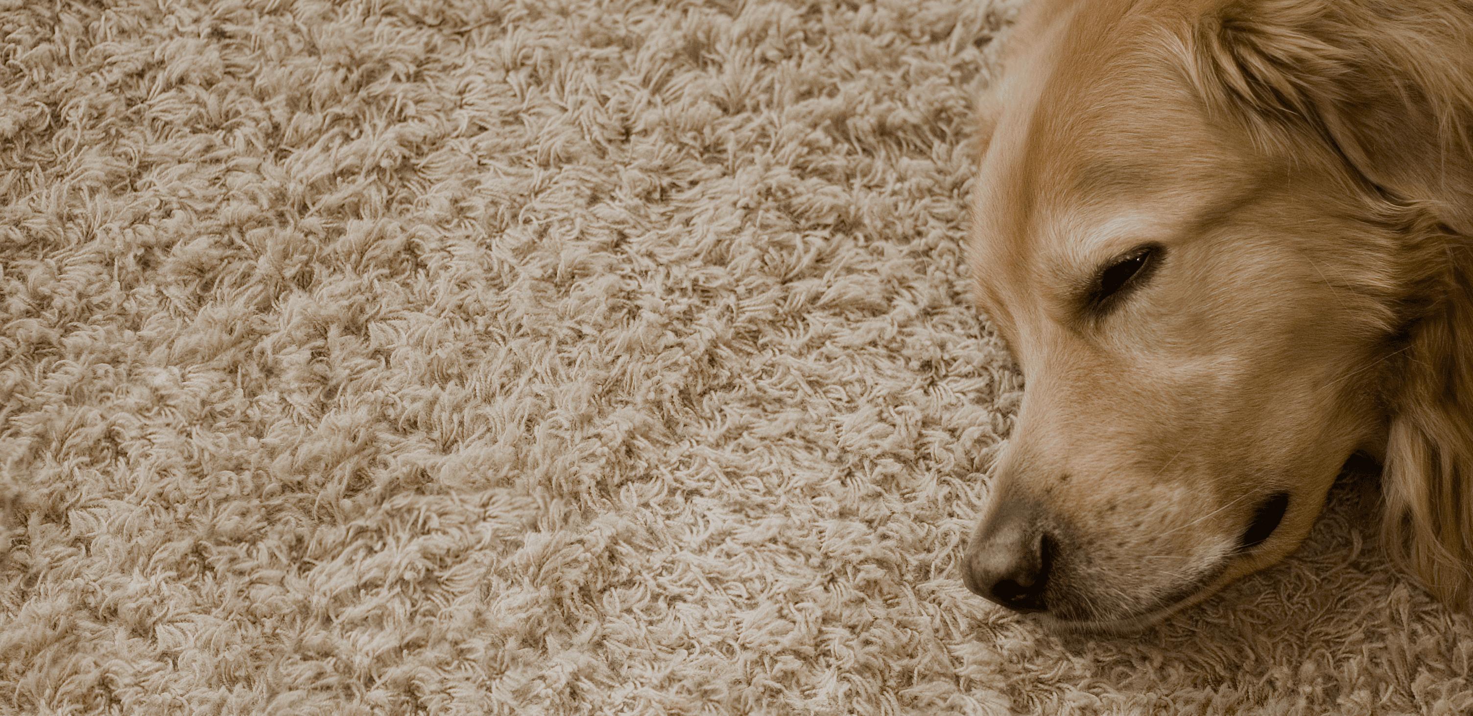 Carpet Cleaner, Goldsboro, NC