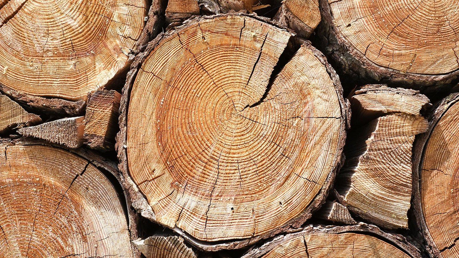 Primo piano del tronco d'albero tagliato