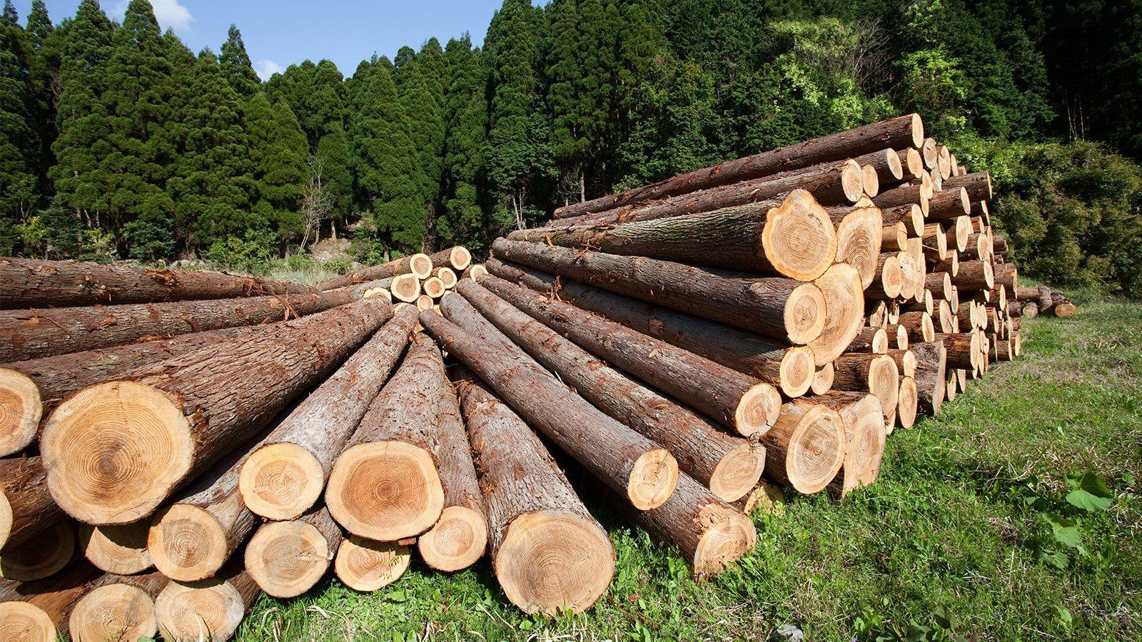 tronchi di albero appena tagliato accumulata fino