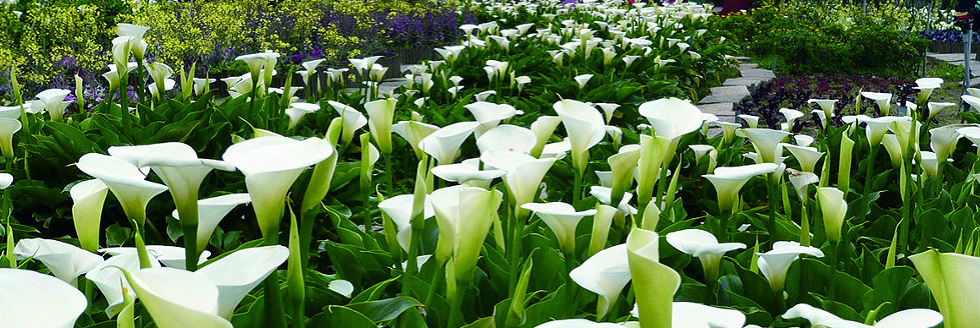 Registering a death clive pugh funeral directors shrewsbury a large group of white flowers mightylinksfo