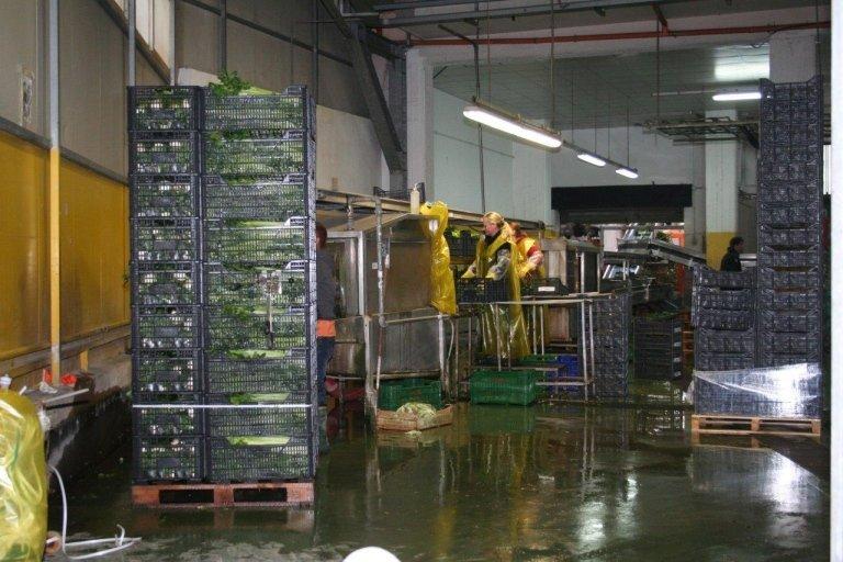 Verdure confezionate per ipermercati, Napoli