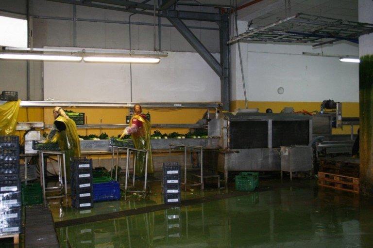 Confezionamento prodotti ortofrutticoli, Campania