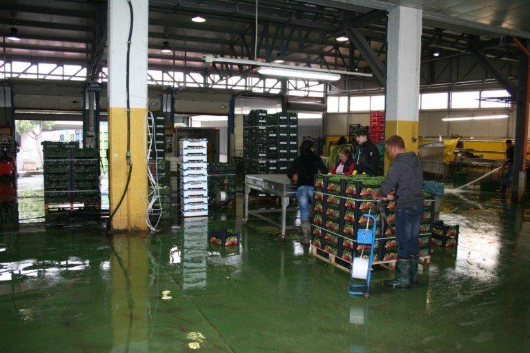Lavorazione ortaggi di stagione per i Mercati Generali