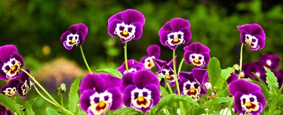 creazione aiuole fiorite Novara