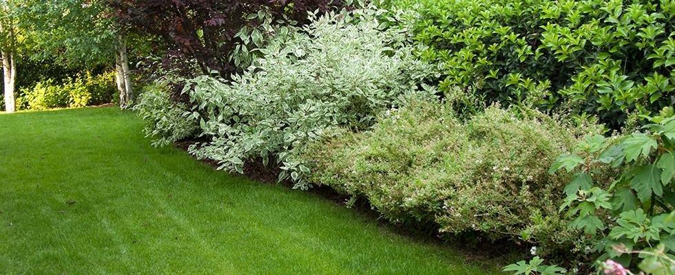 manutenzione aree verdi, giardinaggio