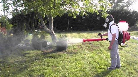 disinfestazione piante ed alberi