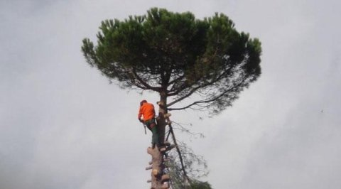 abbattimento alberi ad alto fusto Novara