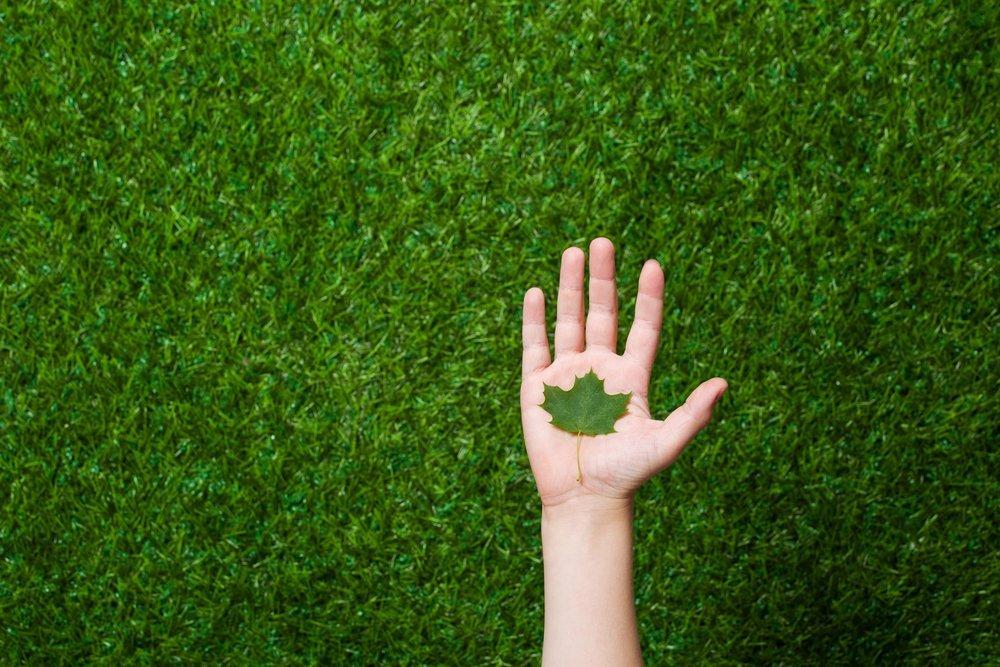 foglia umana dell albero della tenuta della mano