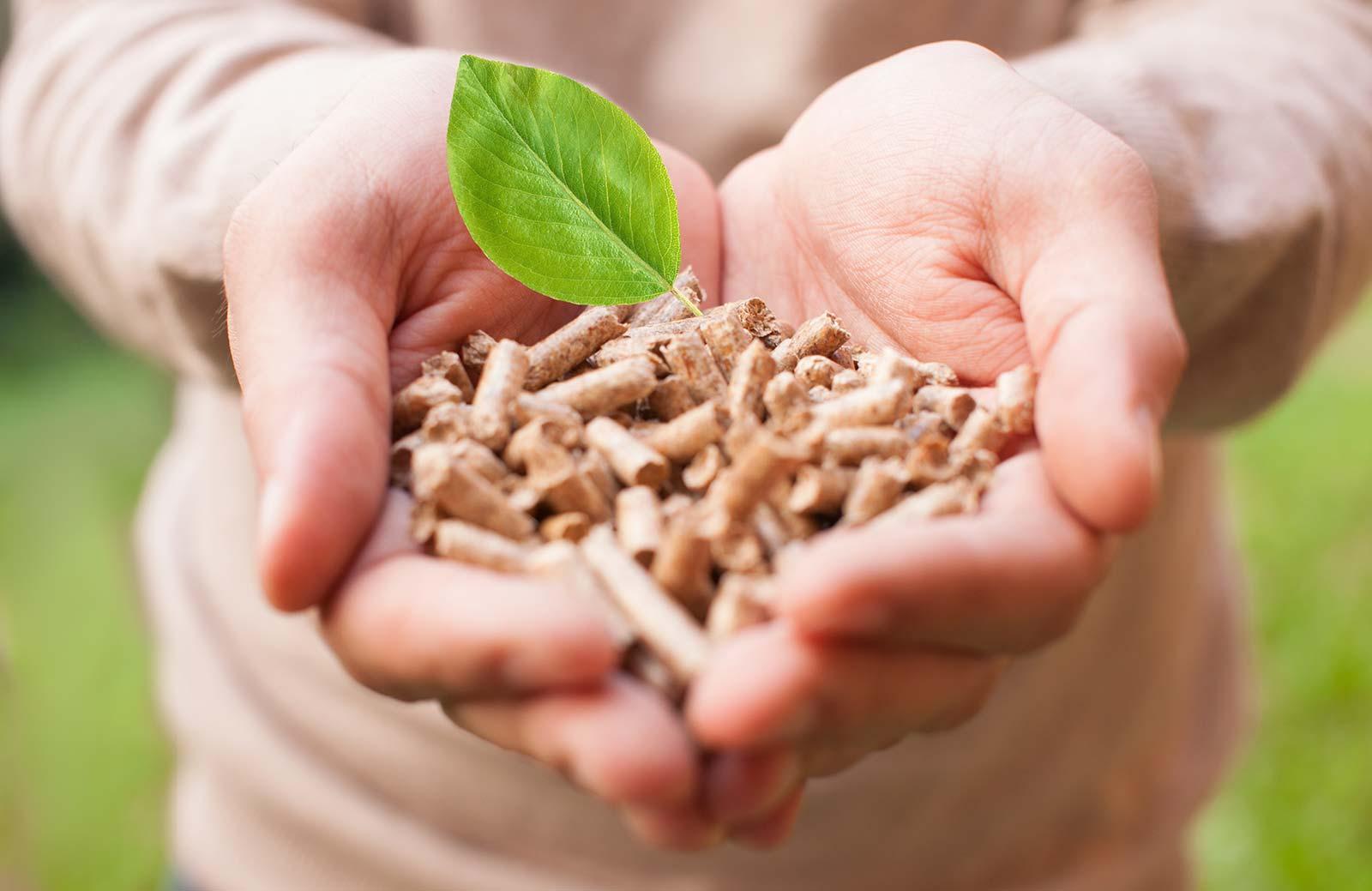 mani con pellet di legno naturale