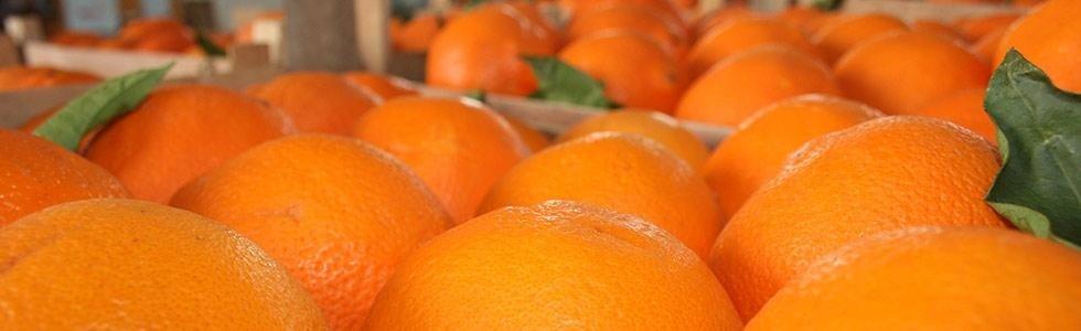 Confezionamento frutta