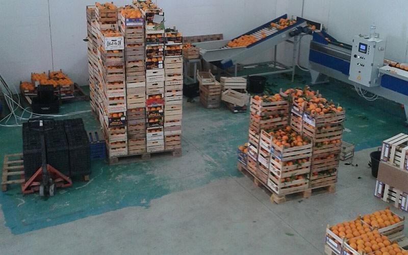 Commercio arance