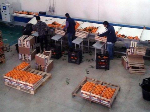 Vendita all'ingrosso frutta