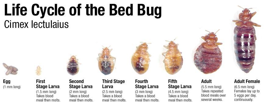 best bed bug exterminator columbus, oh has to offer! bed bug control