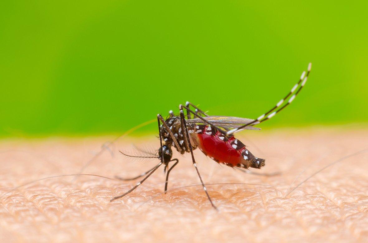 Come Uccidere Acari Della Polvere zanzare e acari: falsi miti