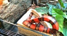 negozio gechi, negozio serpenti, negozio ricci africani