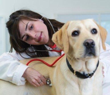lastre e ecografie, controllo cani, strumentazioni diagnosi
