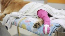 ortopedia veterinaria, cura dei cani, tendini, muscoli