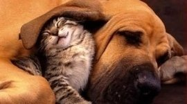 cuccioli di cane, cuccioli di gatto, giochi per animali