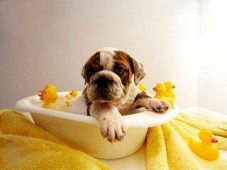 cane che fa il bagno