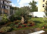 attività di potatura in giardino privato