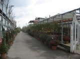 serra per piante da decorazione