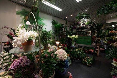 Dei tavoli con dei vasi di fiori e delle piante