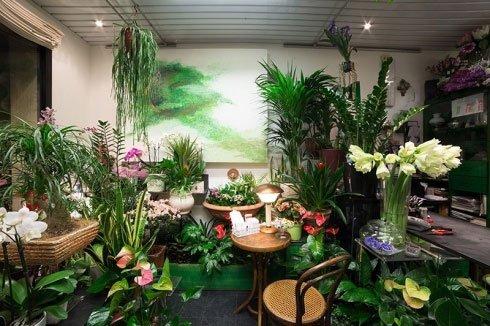 Delle piante in vaso all'interno di un negozio di fiori