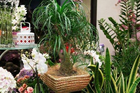 una pianta bonsai