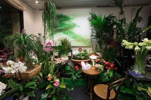 delle orchidee, vasi con dei fiori bianchi  e altre piante