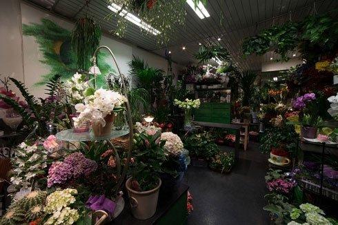 Delle piante appese al soffitto all'interno di un negozio di fiori
