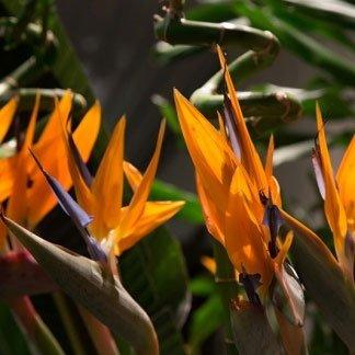 Dei fiori di color arancione