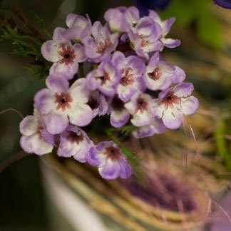 Dei fiorellini di color viola