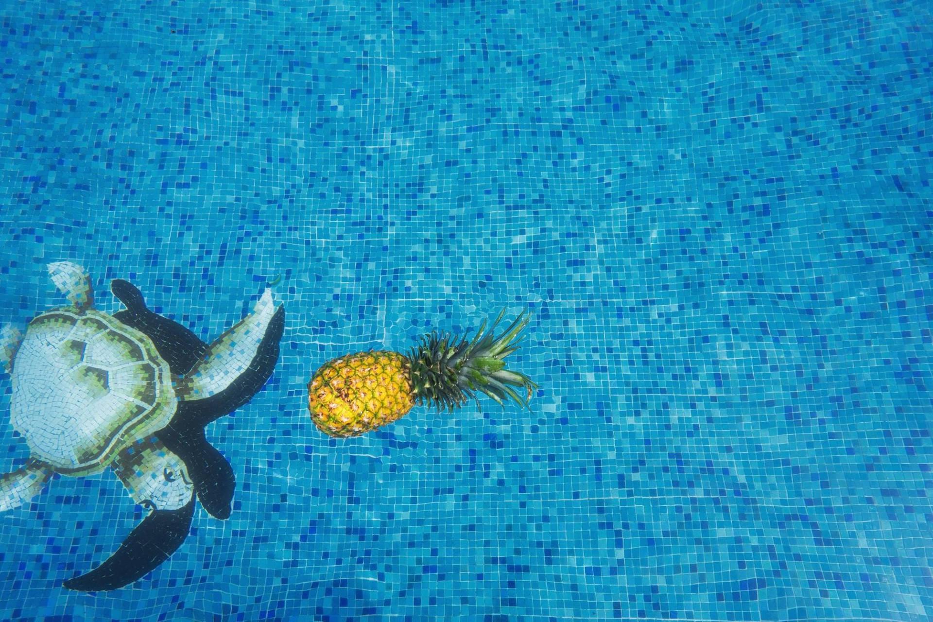 piscina con tartaruga