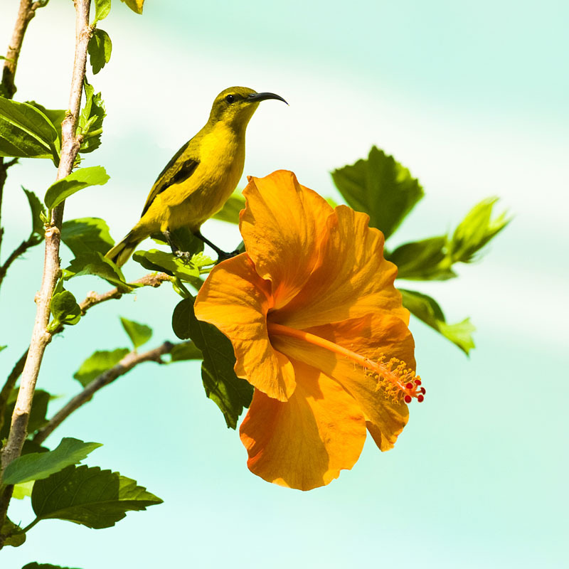 Sunbird sitting on the branch